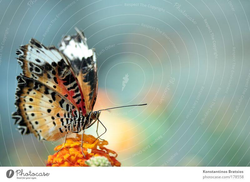 SWEET POWDER Natur Pflanze schön Farbe Blume ruhig Tier Umwelt Leben Blüte natürlich ästhetisch Flügel süß nah Insekt