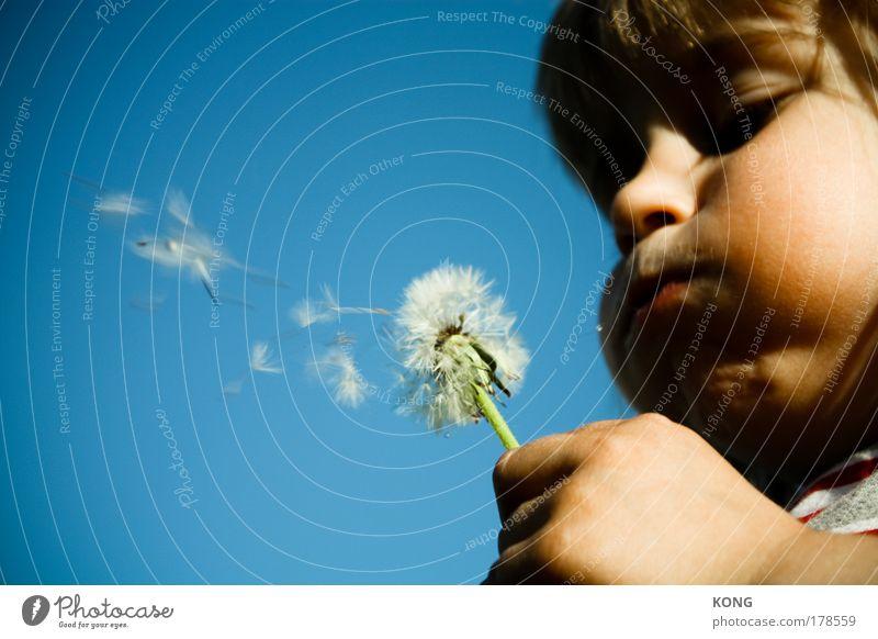 pfffffft Kind Pflanze Sommer Blume Freude Krankheit Leben Junge Luft Wind Kindheit fliegen Gesicht Mund Porträt frei