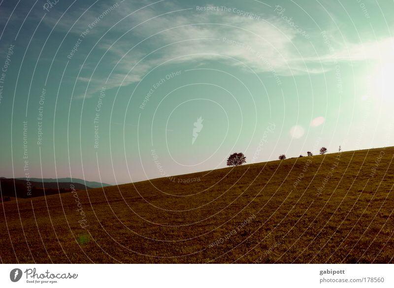 Freiburger Toskana Natur Himmel Baum Pflanze Sommer Ferien & Urlaub & Reisen ruhig Wolken Leben Erholung Landschaft Feld Energie Erde Perspektive ästhetisch