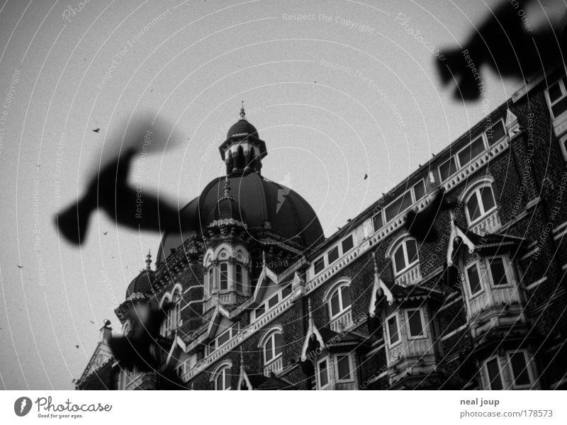 Das Taj Mahal Palace begrüßt den Tag Fassade Asien geheimnisvoll Hotel Indien Fernweh Taube Vorfreude Sehenswürdigkeit Schwarzweißfoto Bombay