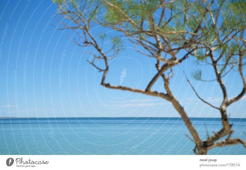 Es könnte alles so einfach sein ... Meer grün blau Pflanze frei Horizont Unendlichkeit Schönes Wetter exotisch Australien West Australien Monkey Mia