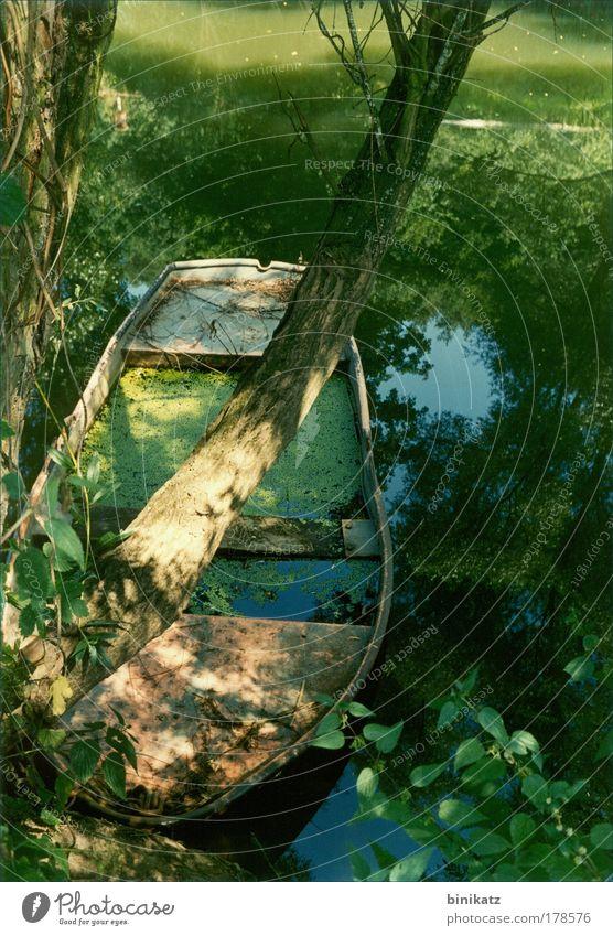 Bootsuntergang Natur Wasser alt Baum grün blau Pflanze Sommer Einsamkeit Gefühle Holz träumen Traurigkeit Landschaft Wasserfahrzeug Umwelt