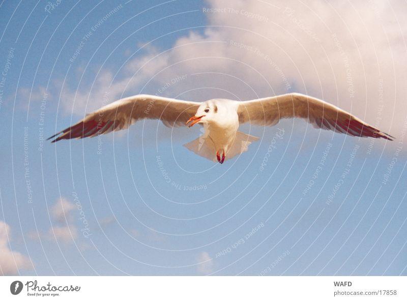 Neugier Himmel Meer blau Wolken Vogel fliegen Neugier Möwe Nordsee St. Peter-Ording