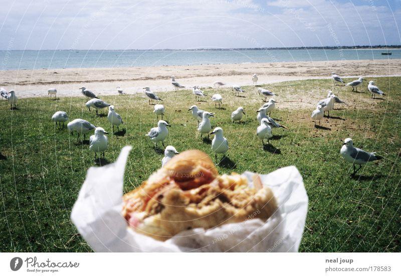 Burger with the lot -1- Ferien & Urlaub & Reisen warten Essen beobachten Neugier Arbeit & Erwerbstätigkeit Erwartung Fernweh frech Vorfreude Ausdauer Fastfood