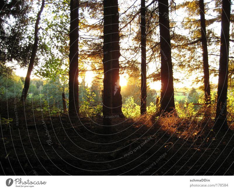 Wald-Licht-Ung Farbfoto Außenaufnahme Menschenleer Textfreiraum unten Abend Dämmerung Schatten Kontrast Sonnenlicht Sonnenstrahlen Sonnenaufgang Sonnenuntergang