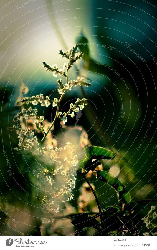 Lichtknipse grün blau Pflanze gelb Blüte Gegenlicht Grünpflanze