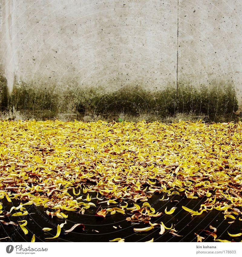 signalfarbe_02 Blatt gelb Herbst Wand Traurigkeit Mauer Regen gold Trauer trist Asphalt Betonwand