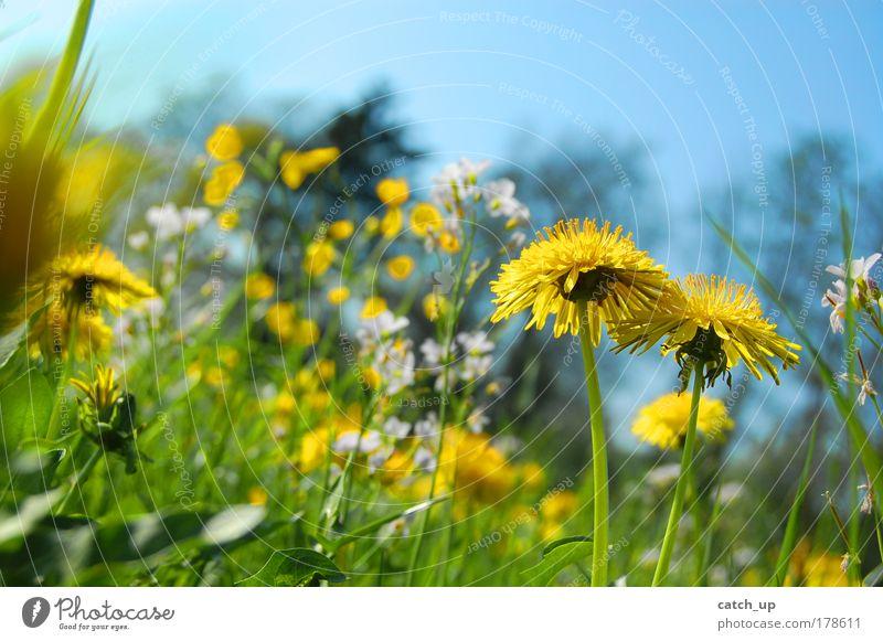 feel it Natur Blume Pflanze Sommer Freude Leben Wiese Gras Glück Zufriedenheit Fröhlichkeit Lebensfreude Schönes Wetter Blumenwiese Frühlingsgefühle