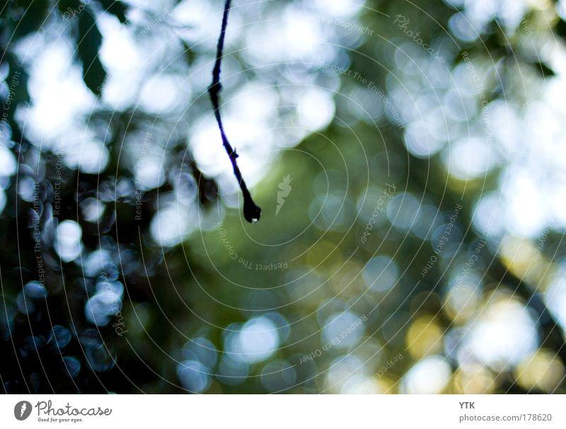 The last remaining Raindrop. Natur Himmel Baum Sonne grün Pflanze Sommer schwarz Farbe Wald dunkel kalt Regen Luft Stimmung glänzend