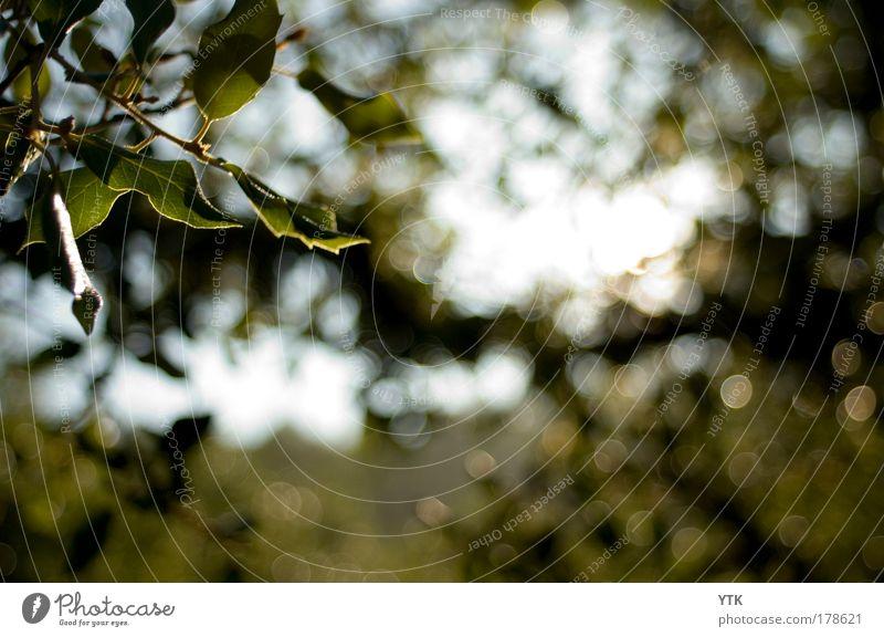 ...glisten and shine in the warm summer sun Natur Himmel Baum Sonne grün Pflanze Sommer Blatt Wald dunkel Wärme Luft Stimmung glänzend Umwelt gold
