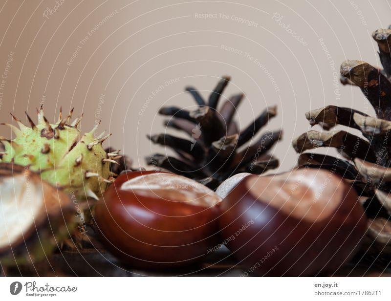 herbstlich Natur Pflanze Leben Herbst braun Wachstum Beginn Samen nachhaltig Basteln Stachel Überleben Kastanienbaum Baumfrucht Tannenzapfen