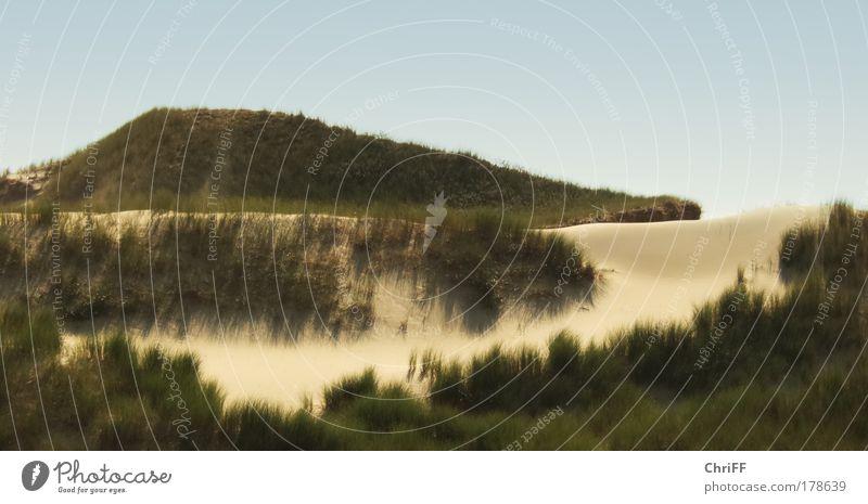 Inseln im Sand Ferien & Urlaub & Reisen Natur Landschaft Wolkenloser Himmel Schönes Wetter Wärme Dürre Gras Sträucher Wildpflanze Dünengras Wiese Hügel Strand