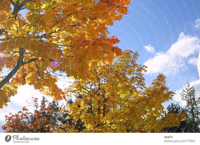 Durchsicht Himmel Baum Sonne Herbst