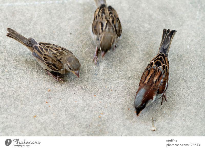 flotter Dreier Ernährung Tier Vogel Wildtier füttern Spatz mehrere 3