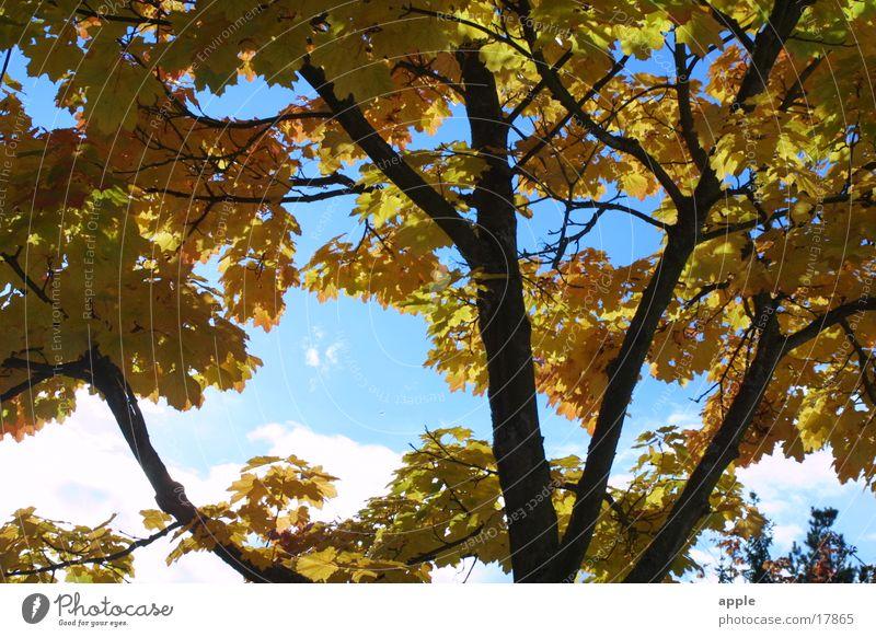 Lichtblick Himmel Baum blau gelb Herbst