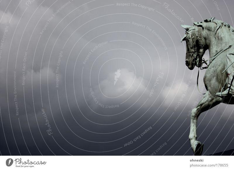 Ausritt Himmel schwarz Einsamkeit Tier dunkel Tod grau Traurigkeit Wind Wetter Pferd trist Klima Sturm Gewitter Unwetter