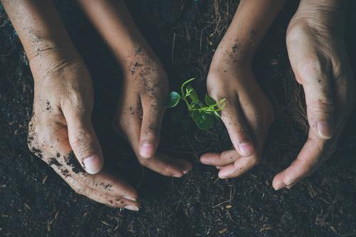 Mensch Kind alt Erwachsene Lifestyle Stil Junge Garten Körper Kindheit 45-60 Jahre Arme 8-13 Jahre Großmutter Künstler sparen