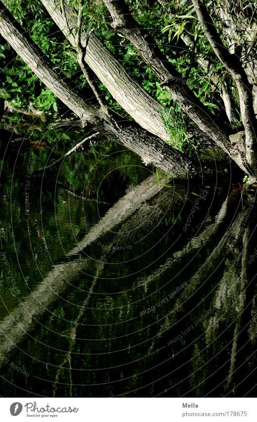 Stille Wasser Natur Wasser Baum Pflanze Sommer ruhig Wald dunkel Garten Traurigkeit See Park Landschaft Stimmung braun Umwelt