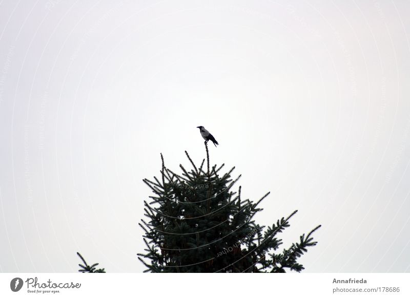 Spitzenposition Baum Pflanze ruhig Tier oben Freiheit Zufriedenheit Vogel Armut frei hoch sitzen Sicherheit beobachten Vertrauen Unendlichkeit