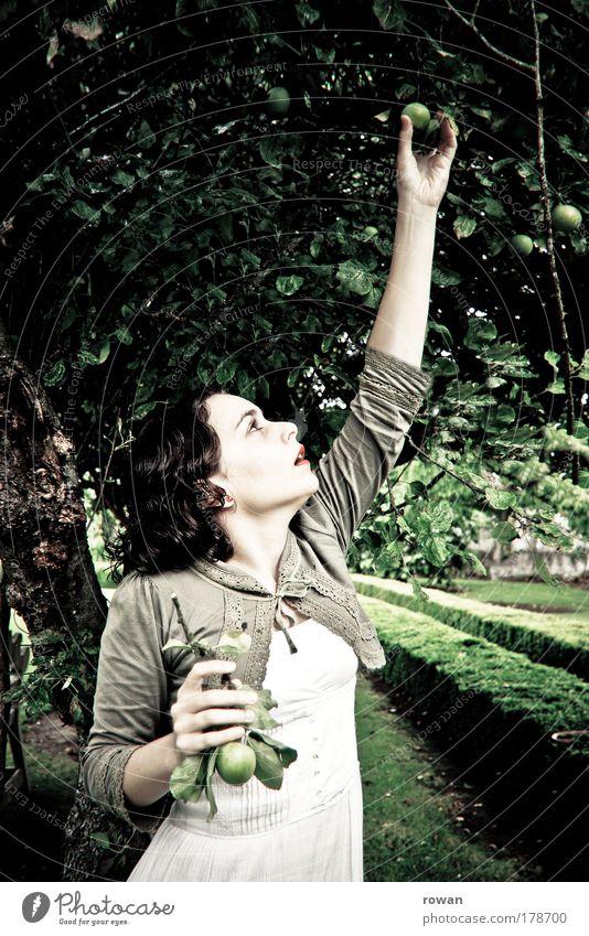 apfelernte Frau Mensch Natur Jugendliche schön weiß Baum grün Pflanze Herbst feminin Garten Erwachsene Frucht retro Kleid
