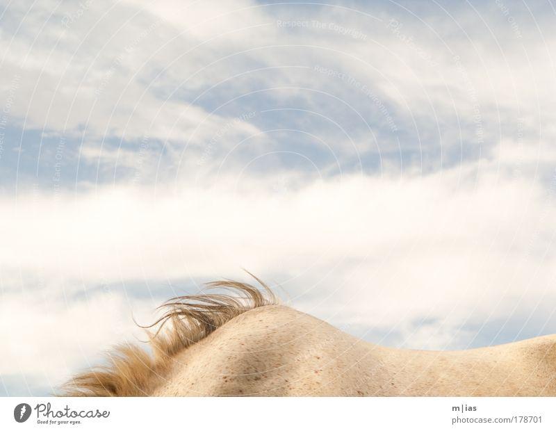 Alles Glück dieser Erde ... Sonne Sommer Tier Ferne Freiheit Luft Kraft elegant Tourismus Erfolg Macht Pferd Zoo Leidenschaft Lebensfreude Leichtigkeit