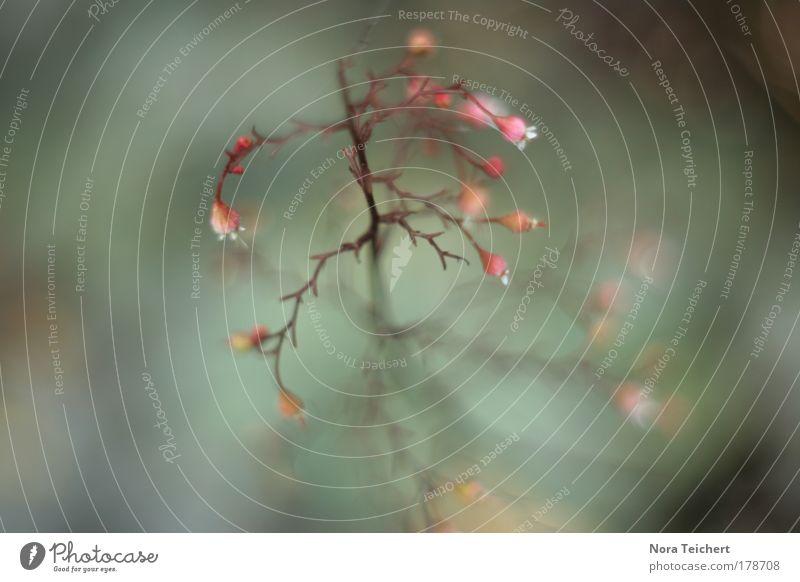 Tiefschlaf. Natur schön Pflanze Sommer Tier Umwelt Landschaft Herbst Blüte träumen Stimmung rosa verrückt Fröhlichkeit ästhetisch Zukunft