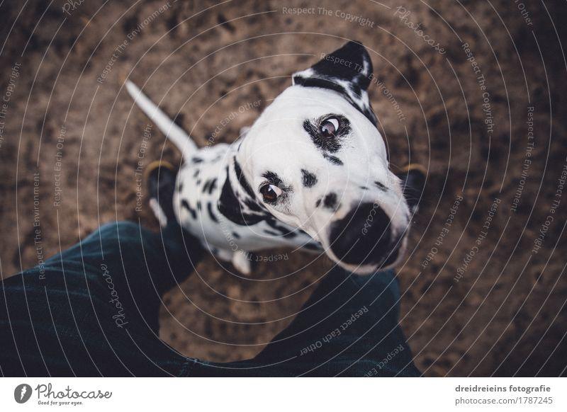 bodenbelag wohnzimmer hund, dalmatiner. hund tier - ein lizenzfreies stock foto von photocase, Design ideen