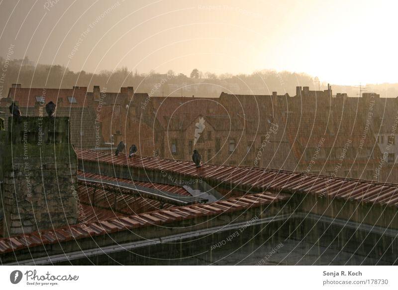 Sommerregen Sonne Stadt ruhig Haus Erholung Traurigkeit Regen Stimmung Deutschland Wetter Europa Dach Häusliches Leben Unwetter Schornstein Surrealismus