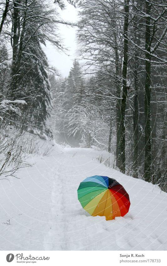 Schneeschirm Farbfoto Außenaufnahme Menschenleer Tag Zentralperspektive Ausflug Winter Winterurlaub wandern Landschaft Baum Wald Regenschirm Stimmung Freude