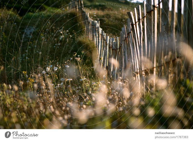 Sonnenuntergang am Strand in der Bretagne Meer Umwelt Natur Landschaft Pflanze Sonnenaufgang Sonnenlicht Schönes Wetter Gras Sträucher Wildpflanze Fröhlichkeit