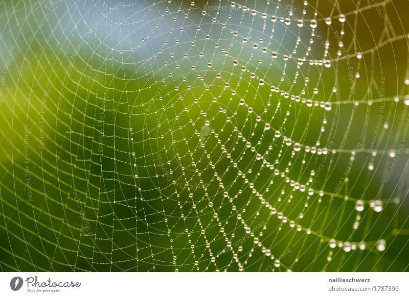 Tautropfen auf einem Spinnennetz Internet Umwelt Natur Netz Netzwerk Wasser Zeichen Ornament Linie Tropfen glänzend einfach Flüssigkeit kalt nah natürlich schön
