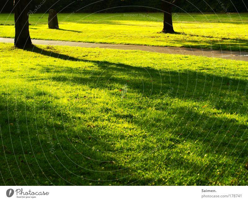abends im park ... Natur Baum Sommer ruhig Farbe Erholung Wiese Freiheit Landschaft Umwelt Gras Wege & Pfade träumen Wärme Stimmung Park