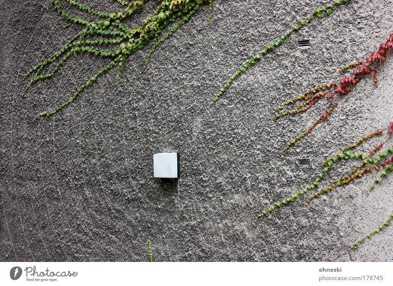 Angriff! Natur grün Pflanze rot Haus Lampe Wand Mauer Fassade Wachstum Wein Dorf Putz Einfamilienhaus Kletterpflanzen