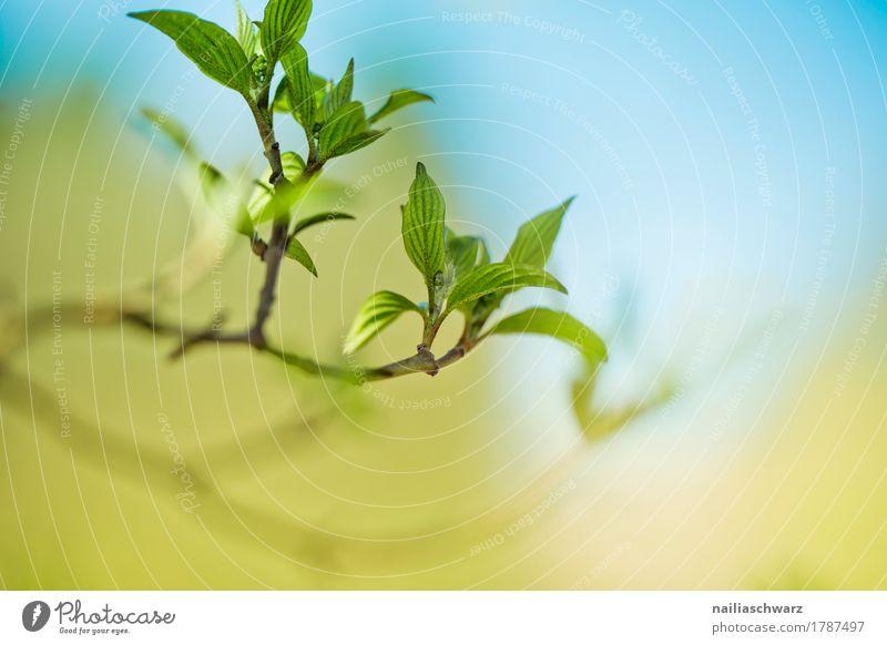 Frühling Natur Pflanze blau schön grün Baum Blatt Leben gelb Umwelt natürlich Garten träumen Park Wachstum