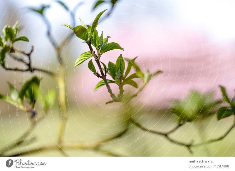 Frühling Leben Umwelt Natur Pflanze Baum Blatt Grünpflanze Ast Zweige u. Äste Garten Park springen Wachstum Duft Fröhlichkeit natürlich schön blau grün rosa