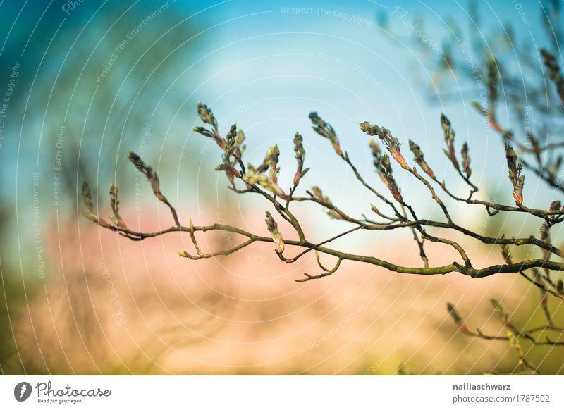 Frühling Leben Umwelt Natur Pflanze Himmel Schönes Wetter Baum Blatt Blüte Grünpflanze Ast Park Blühend Duft Wachstum natürlich schön blau rosa Frühlingsgefühle