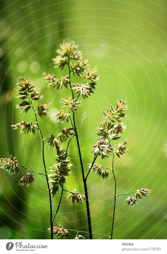 green green grass Farbfoto Außenaufnahme Muster Strukturen & Formen Menschenleer Textfreiraum rechts Textfreiraum oben Tag Licht Sonnenlicht