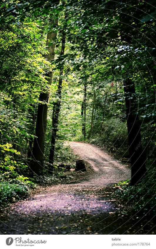 weg Farbfoto Menschenleer Sonnenlicht Ausflug Landwirtschaft Forstwirtschaft Umwelt Pflanze Tier Baum Wald Wege & Pfade Waldweg dunkel natürlich Gefühle Neugier