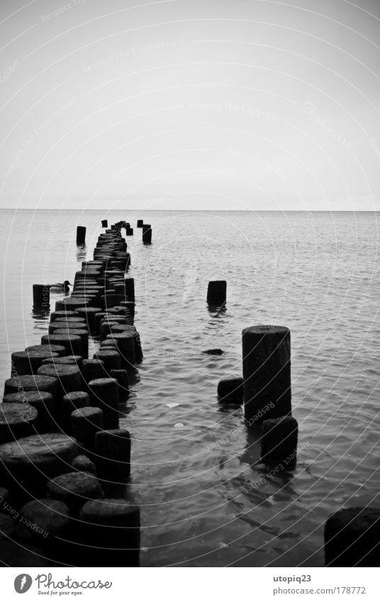 Die alte Ente und das Meer Schwarzweißfoto Außenaufnahme Menschenleer Textfreiraum oben Landschaft Wasser Horizont Winter schlechtes Wetter Ostsee Tier Vogel 1