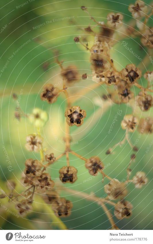 VerZwEiGT NoCHMaL ! Natur schön Pflanze Sommer ruhig Tier Herbst Gefühle Blüte träumen Park Landschaft Umwelt Zeit frei verrückt