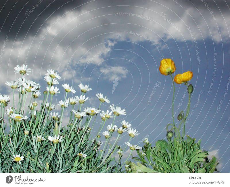 ruhe vor dem sturm Blume Wolken Gewitter