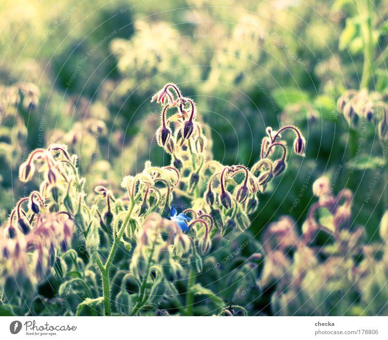 Farbrausch Natur Pflanze Sommer Tier Leben Herbst Wiese Blüte Gras Glück Park Landschaft Zufriedenheit Stimmung Feld Umwelt