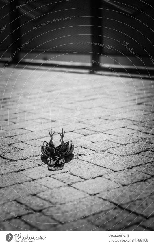 When doves cry Tier Totes Tier Vogel Taube 1 Stein alt liegen gruselig Krankheit trist grau Gefühle Traurigkeit Trauer Tod Verfall Schwarzweißfoto Außenaufnahme