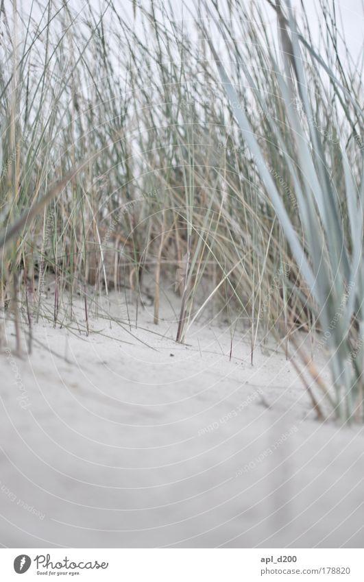 Dünengras Natur grün Pflanze Sommer Strand Ferien & Urlaub & Reisen Meer Umwelt Gras grau braun Erde Kraft elegant Insel Tourismus