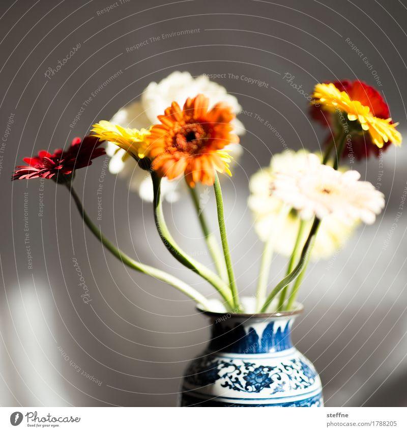 Gerberas Blume schön Blumenvase Blumenstrauß Floristik Geburtstag Wachsamkeit Farbfoto Innenaufnahme Textfreiraum links Textfreiraum oben Schwache Tiefenschärfe