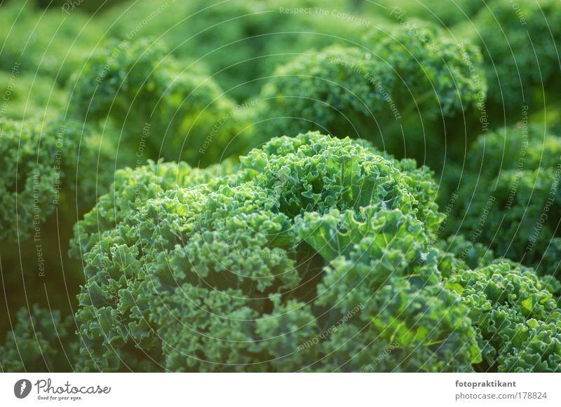 im Grünen Farbfoto Außenaufnahme Nahaufnahme Menschenleer Tag Sonnenlicht Totale Blick nach vorn Pflanze Sträucher Grünpflanze grün