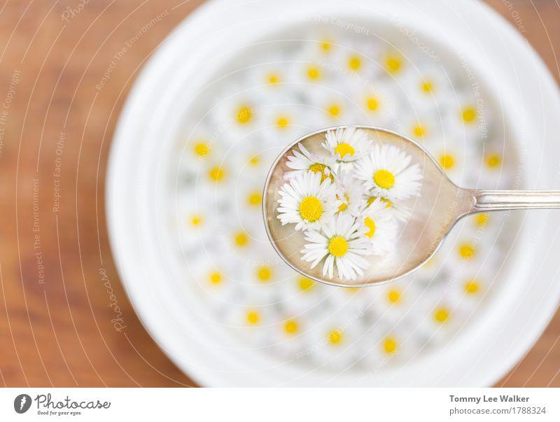 Sommer schön Gesunde Ernährung weiß Blume Freude Speise Essen Liebe Gefühle Freiheit Frucht Häusliches Leben träumen frei frisch