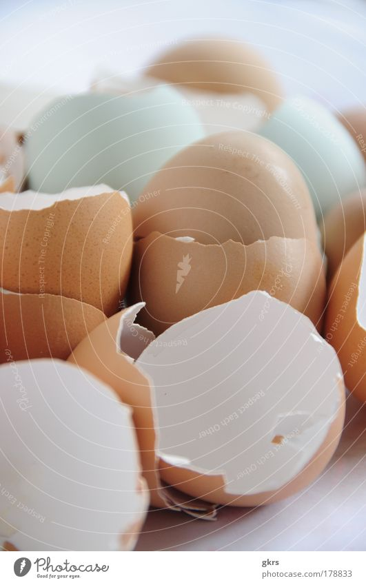 Eierschalen Natur Schalen & Schüsseln Verpackung Qualität
