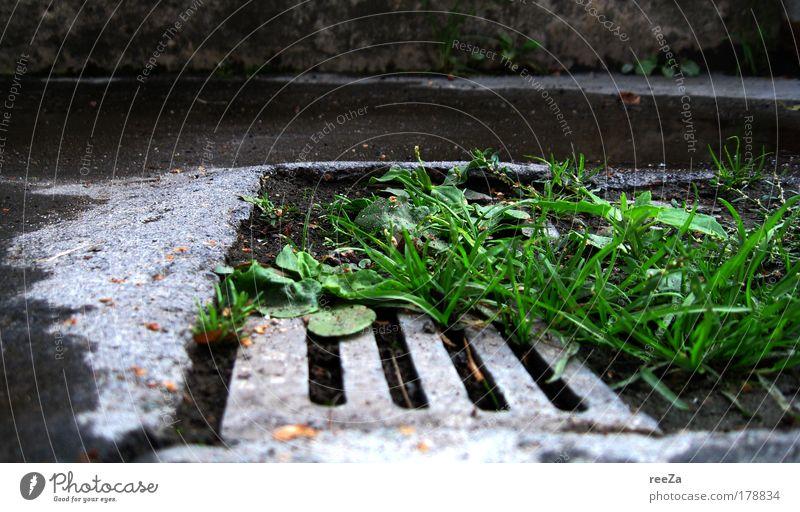 defiance of nature. Natur grün Pflanze Umwelt Gras grau natürlich Park Kraft Erde wild frei Wachstum ästhetisch Macht Blühend