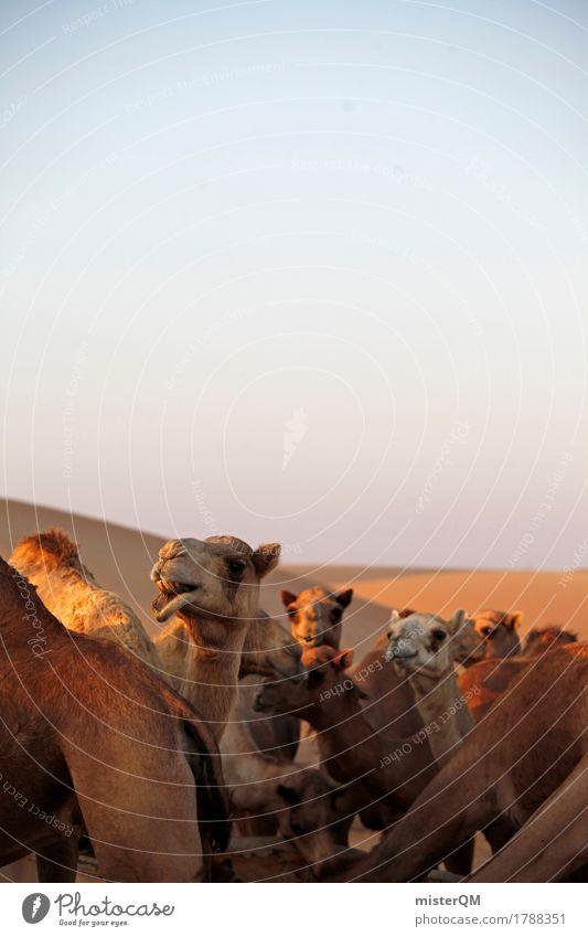 Verkehrsmittel. Sommer Tier Abenteuer viele Wüste heiß Sommerurlaub Blauer Himmel Tierzucht Herde Kamel Sahara